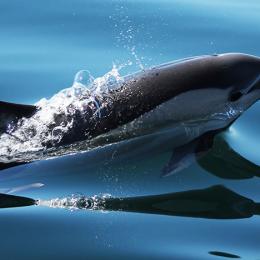Dolfijnen en walvissen spotten